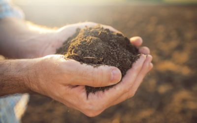 Everything Revolves Around the Soil