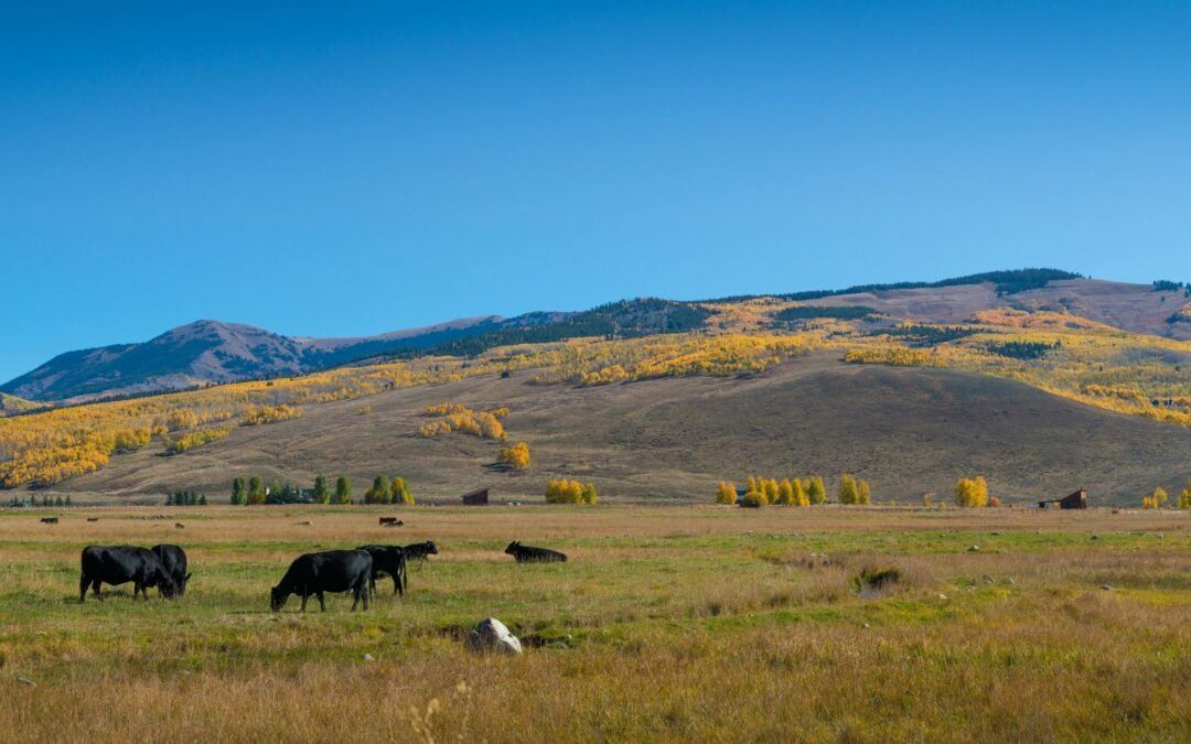 The Benefits of Regenerative Ranching